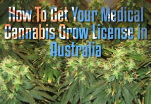 Get License Grow Medical Cannabis Australia